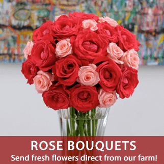 fresh-roses-send-flowers-to-the-philippines