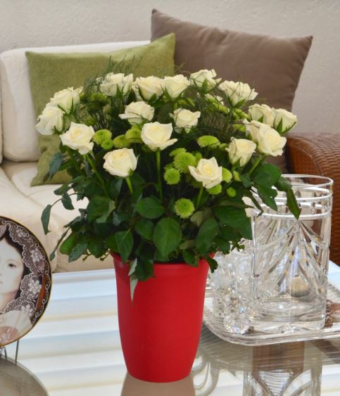 For The Valentine With A Green Thumb: Pearl Premium
