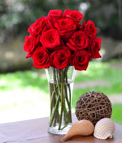 Classic Red Roses: Red France